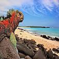 Paquetes a Islas Galapagos